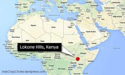 kuda nil afrika lokone-hills-kenya