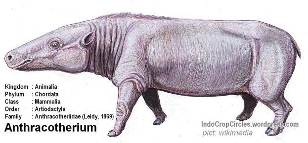 nenek moyang kuda nil Anthracotherium