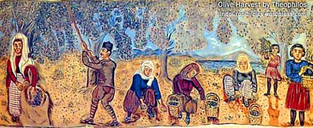 olive-harvest-Theophilos