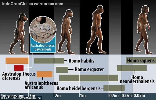 Australopithecus Deyiremeda humans family tree silsilah manusia purba