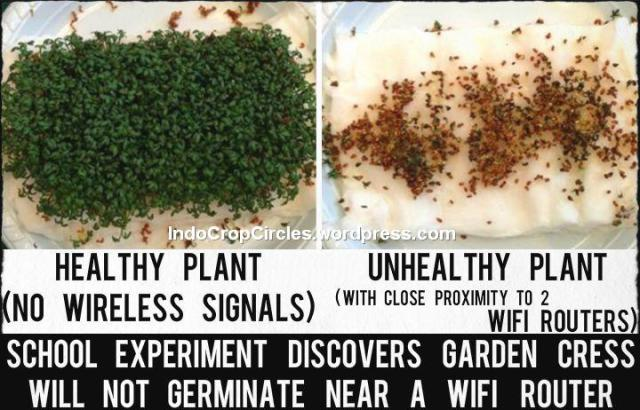 bahaya-radiasi-wi-fi-rusak-tanaman-pemicu-kanker 2