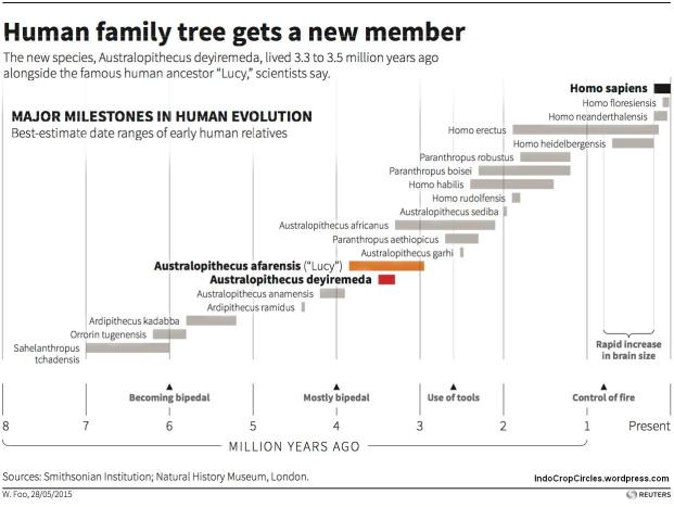 Humans family tree silsilah manusia purba