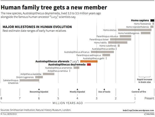 Humans family tree silsilah manusia purba