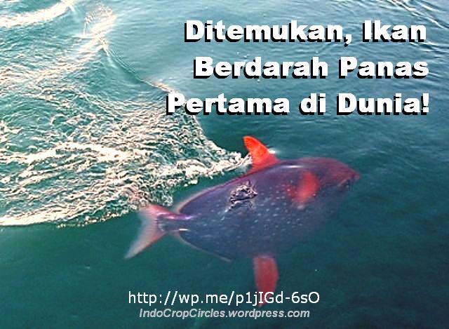 ikan berdarah panas lampris-guttatus_opah-3 banner