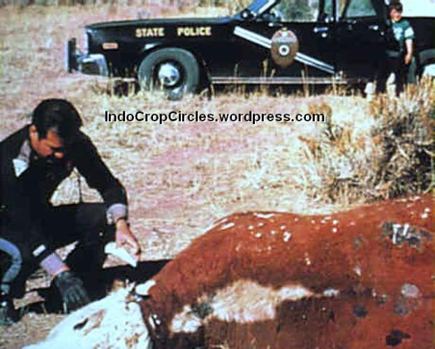 Gabe Valdez sedang meneliti mutilasi ternak di daerah Dulce, New Mexico.