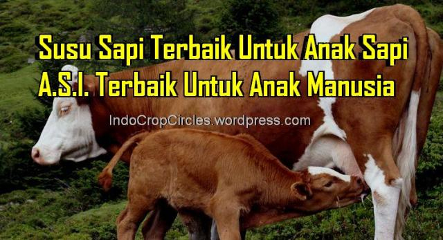susu sapi berbahaya