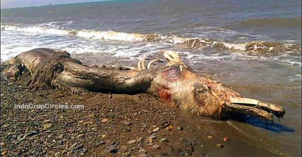 Monster Laut Berparuh dan Berbulu Terdampar di Russia 01