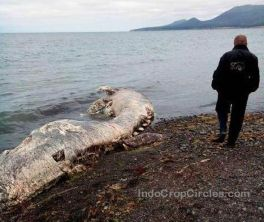 Monster Laut Berparuh dan Berbulu Terdampar di Russia 03