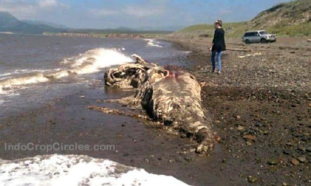 Monster Laut Berparuh dan Berbulu Terdampar di Russia Sea-creature-in-Russia