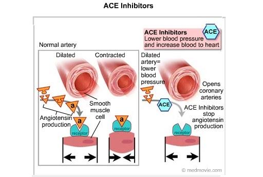 https://indocropcircles.files.wordpress.com/2015/12/7af16-aceinhibitors-bmp.jpg