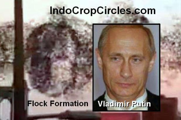 burung flock over new york vladimir putin 02
