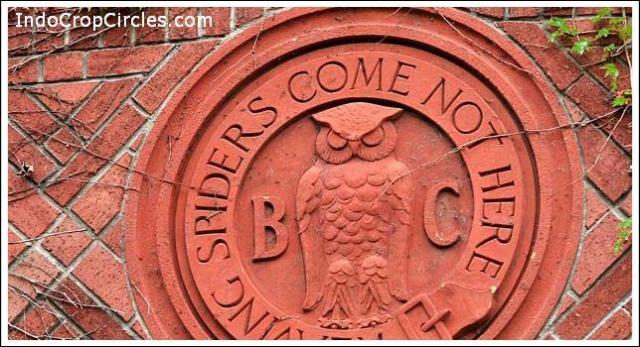 burung hantu owl