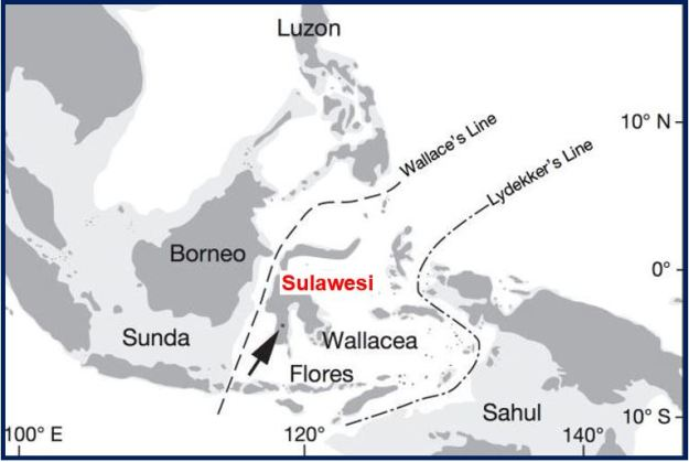 Wallacea has two major biogeographical boundaries: Lydekker's Line to the east and Wallace's Line to the west. Exposed land during periods of low sea level (−120 metres) is lightly shaded. The arrow points to the Talepu Area. (Image: nature.com)
