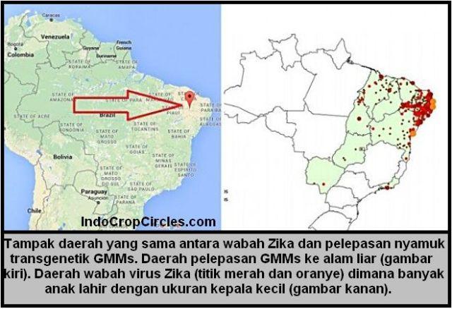 virus zika released map