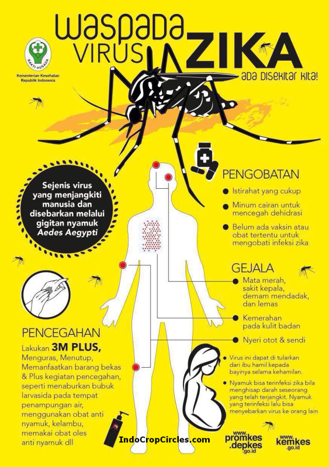zika virus indonesia