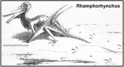 Rekonstruksi dinosaurus Rhamphorhynchus (credit: Riou)