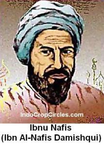Ibn_al-Nafis
