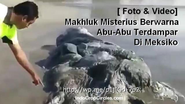 makhluk-abuabu-misterius-terdampar-di-meksiko banner
