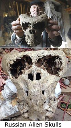 Russian Alien Skulls 3