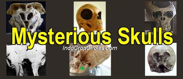 tengkorak misterius kerangka alien-skull-header