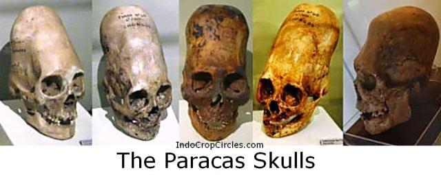 Tengkorak The Paracas Skulls