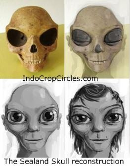tengkorak The Sealand Skull_origin_extraterrestrial 02