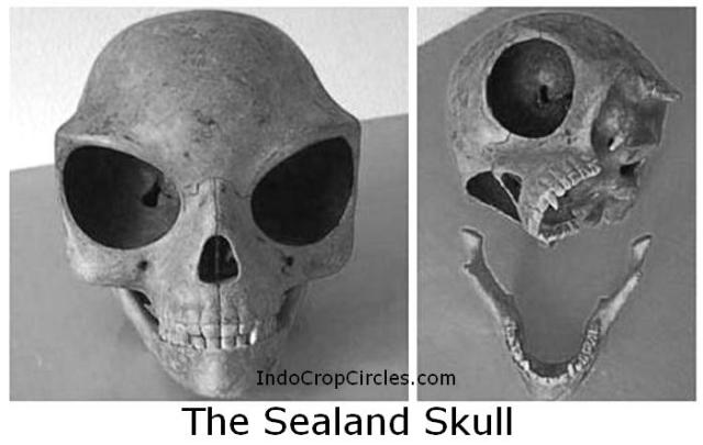 tengkorak The Sealand Skull_origin_extraterrestrial