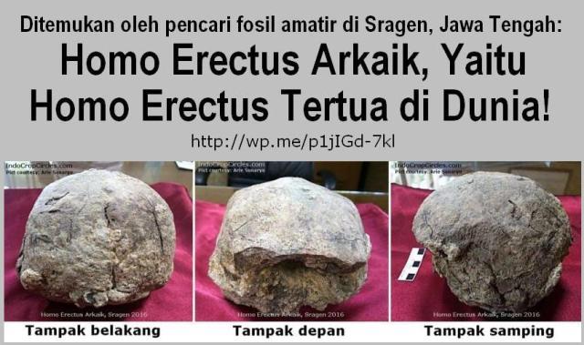 fosil-tengkorak-homo-erectus arkaik-di-sragen Indonesia banner