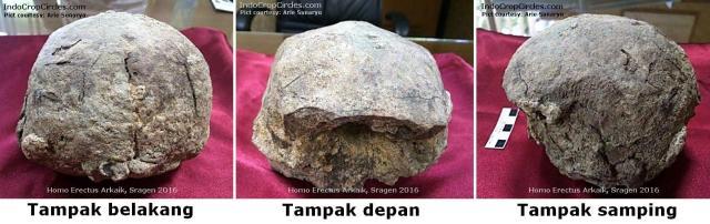 fosil-tengkorak-homo-erectus arkaik-di-sragen Indonesia header