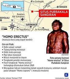 homo erectus-01