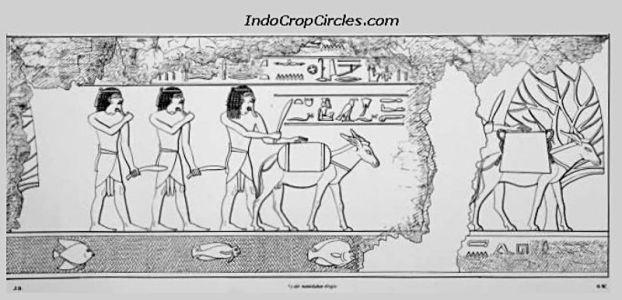 Hiasan ikat kepala bangsa Punt mirip ikat kepala Bangsa Enggano