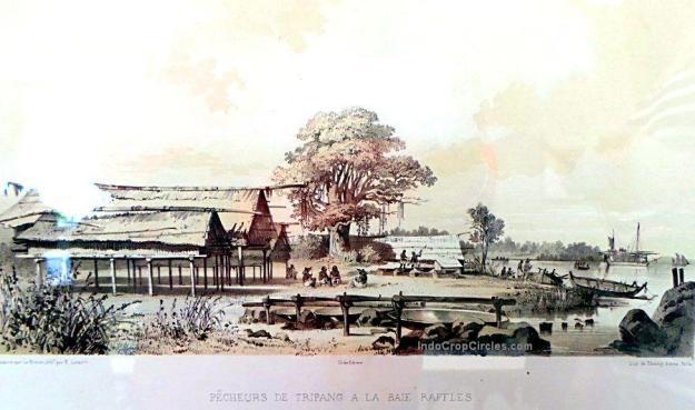 Lukisan oleh bangsa Eropa, memperlihatkan suasana pantai utara Australia.