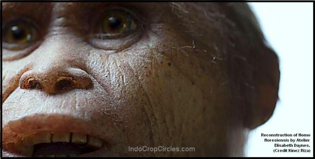 Reconstruction of Homo floresiensis by Atelier Elisabeth Daynes. Credit Kinez Riza