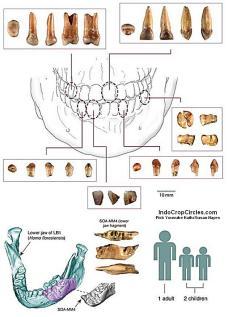 Bagian dari temuan Hominid baru di situs Mata Menge yang terdiri dari fosil gigi dan rahang dari 3 individu, yaitu satu dewasa dan dua anak-anak.