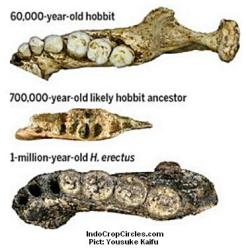 Temuan Hominid Baru di Situs Mata Menge Telusuri Evolusi Homo floresiensis 5